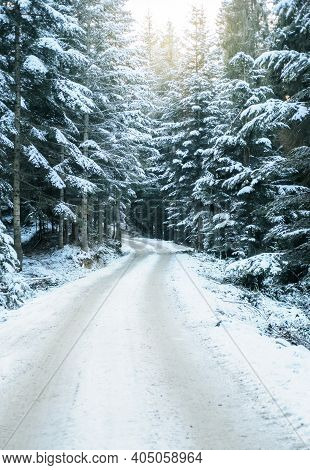 Forest Road In Foggy Night In Winter. Sun Light In The Winter Forest With White Fresh Snow And Pine