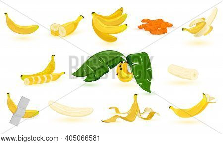 Collection Of Banana Fruit, Slice, Peel, Pulp. Vector Vitamin And Diet Fruit. Tropical Fruit, Banana