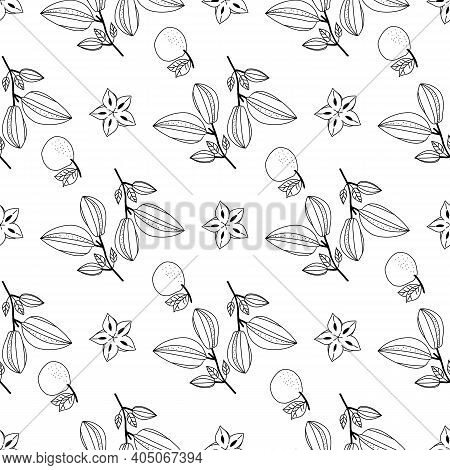Seamless Doodle Pattern With Tropical Fruits Of Carambola And Tangerine. Vector Illustration.