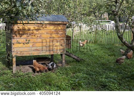 Small Chicken Coop With Chickens In The A Farm.