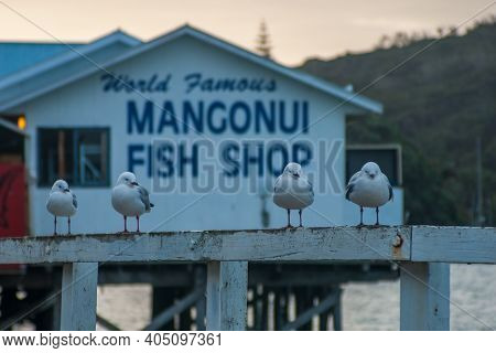 Mangonui, New Zealand - March 29, 2010: View Of Seagulls And A Famous Fish And Chips Restaurant In T