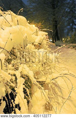 Winter Season, A Bush Covered With Snow, A Lot Of Snow On The Streets And Sidewalks, Evening In Wint