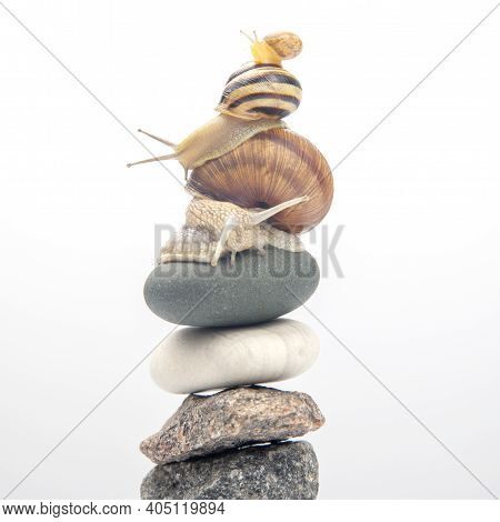 Helix Pomatia. Snails On Top Of Each Other Balance On Top Of A Stone Pyramid. Mollusc And Invertebra