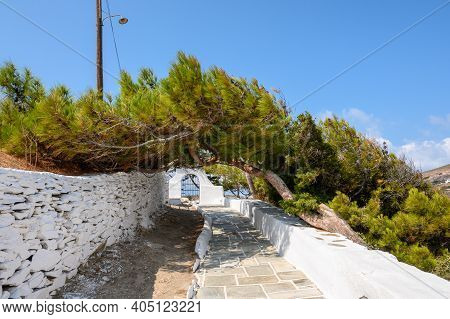 Amazing Vegetation In Front Of The Church Of Agia Irini (saint Irene) Near The Port Of Ios. Cyclades