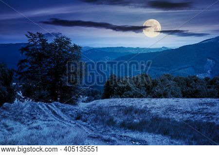 Beech Forest On The Mountain Meadow At Night. Beautiful Summer Landscape. Grass And Trees On The Hil