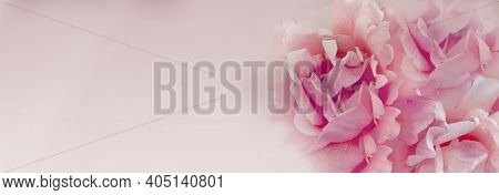 Blurred Background With Rose Of Pink Color. Copy Space For Your Text. Mock Up Template