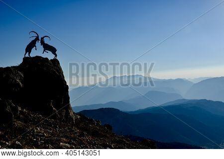 Akseki Region, Habitat Of Wild Goats ;habitats In The Mountains And Struggle Ambitions
