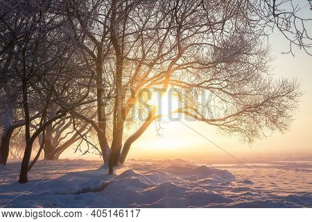 Winter Nature At Sunset. Snowy Trees In The Bright Sun. Christmas Scenery. Amazing Winter Nature Lan