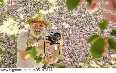 Photographer Man Take Sakura Blossom Photo. Cherry Blossoming Garden. Photographer Taking Photo Of A