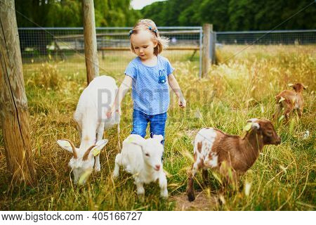 Adorable Toddler Girl Playing With Goats At Farm. Child Familiarizing Herself With Animals. Farming