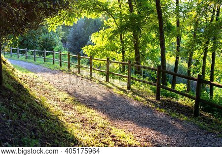 Beautiful Summer Nature Landscape. Green Trees In Park With Pathway And Fence. Morning Light In Publ