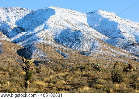 Joshua Trees Besides Chaparral Shrubs On The High Desert Plateau With Snow Covered Hills Beyond Take