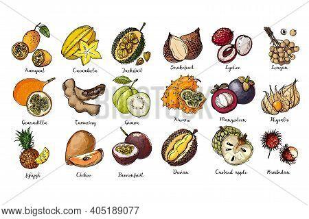 Fruits Drawn By A Line On A White Back. Salak, Lychee, Longan, Kiwano, Mangosteen, Physalis, Rambuta