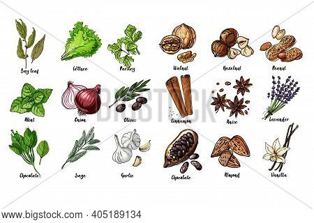 Herbs. . Italian Herb Drawn Black Lines On A White Background. Vector Illustration. Bay Leaf, Lettuc
