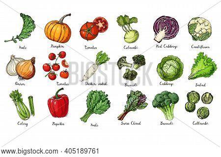 Set Of Colored Vegetables. Fresh Food. Kale, Pumpkin, Onion, Tomato, Pepper, Celery, Cabbage, Lettuc