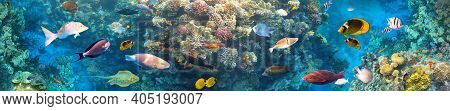 Underwater Colorful Tropical Fishes At Coral Reef At Red Sea - Bluecheek Butterflyfish, Pale Damsel,