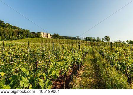 View Over Vineyards To Villa Ludwigshoehe Near Edenkoben, Palatinate, Rhineland-palatinate, Germany