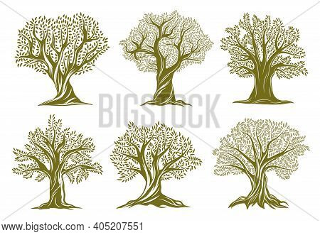 Old Olive, Willow Or Oak Trees Engraved Icons. Trees With Twisted Trunk And Branches, Big Crown, Gre