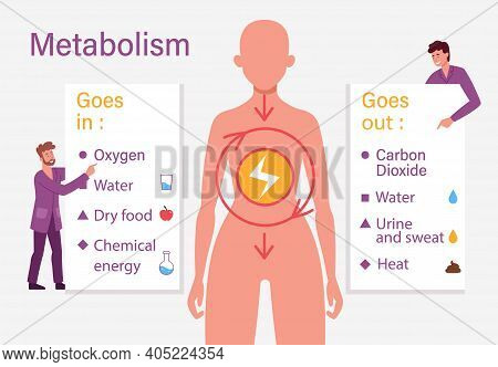 Biological Diet Infographic. Metabolism Vector Illustration. Chemical Energy Educational Scheme. Exp
