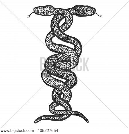 Intertwined Two Snakes. Engraving Vector Illustration. Sketch