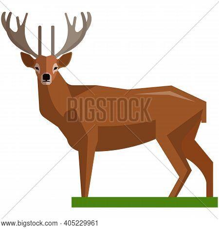 Brown Deer Hoofed Ruminant Mammals Isolated On White