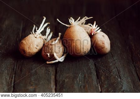 Sprouted Ugly Organic Potato On Wooden Background. Close Up. Flabby, Wrinkled, Ugly Potatoes With Gr