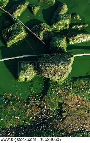 Close Up River Green Water And Rocks Texture In Harmful Algal Blooms, Natural Background, Beautifull