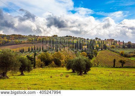 Rural tourism. Rural farms on the picturesque hills of Tuscany. Neat smooth rows of vineyards on gentle hills. Olive trees on green grassy meadows. The concept of active, rural and photo tourism