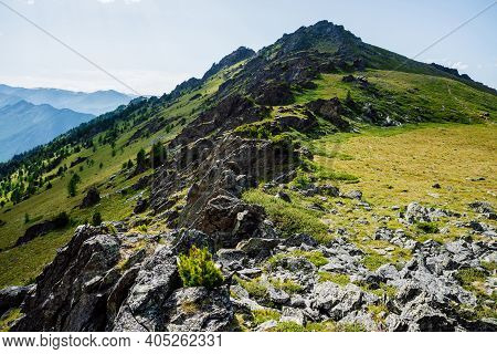 Vivid Green Mountainside With Conifer Forest And Crags. Coniferous Trees And Rocks On Big Hillside.
