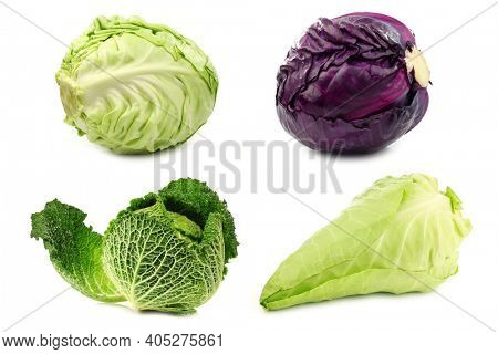 fresh red cabbage, white cabbage, green cabbage and a pointed cabbage on a white background