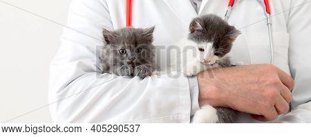 Cats In Vet Doctor Hands. Doctor Veterinarian Examining Kittens. Mammal Cats In Veterinary Clinic. V