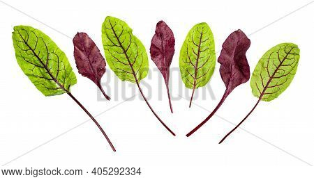 Red And Green Fresh Leaves Of Chard Leafy Vegetable (mangold, Beet Tops) Isolated On White Backgroun