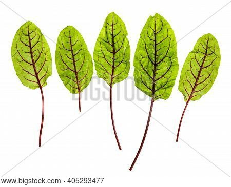 Several Fresh Leaves Of Green Chard Leafy Vegetable (mangold, Beet Tops) Isolated On White Backgroun
