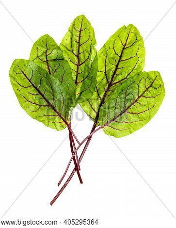 Bunch Fresh Leaves Of Green Chard Leafy Vegetable (mangold, Beet Tops) Isolated On White Background
