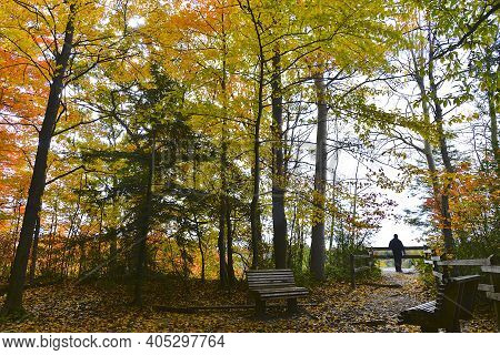 Beautiful View Of The Natural Parkland With Park Bench And Fence In Autumn