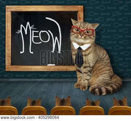 A Beige Cat Teacher In A Tie And Glasses Wrote Meow In Chalk On The Chalkboard.