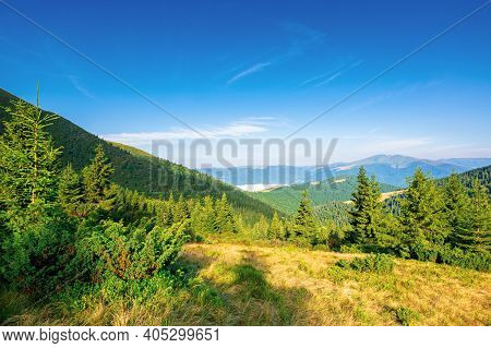Fir Trees On The Hillside Meadow In Morning Light. Beautiful Nature Scenery In Summer Time. Fog In T