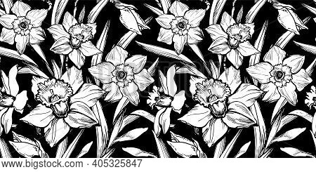 Closeup Black And White Daffodil Seamless Pattern Drawn By Hand On Black Background. Ink Freehand Fl