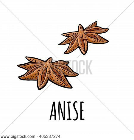 Anise Fruit With Seed. Vector Vintage Engraved