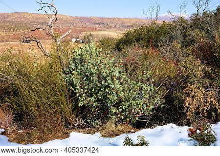 Rural Hillside Covered With Chaparral Plants Surrounded By Snow Overlooking Arid Badlands Taken At T