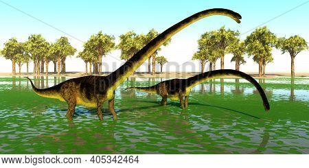 Omeisaurus Dinosaur Swamp 3d Illustration - Two Omeisaurus Dinosaurs Eat Water Plants For The Minera