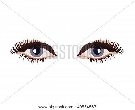 Female eyes vector illustration