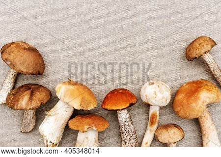 Various Forest Mushrooms On Sackcloth Background. Fresh Raw Fungus On Table. Scaber Stalk Birch Bole