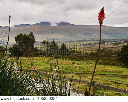 Ecuadorian Andean Mountains Showing Paramo Type Vegetation