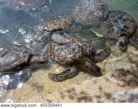 Group Of Turtles In Pond Of Captivity Area