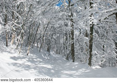 Pathway In The Beech Forest Of Monte Pettino Covered By Snow