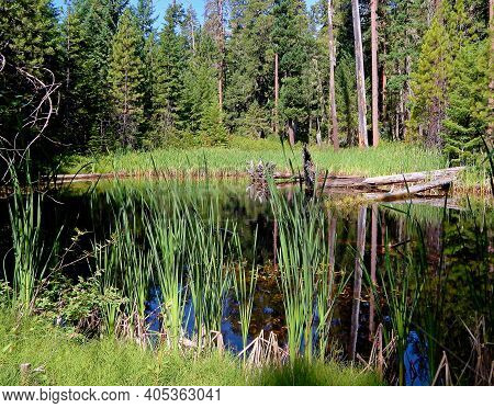 Woodland Pond - A Pond In The Forest On Rhododendron Ridge Between The North And South Umpqua Rivers