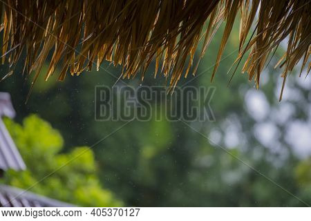 Focus At Thatched Roof Eaves With Blurred Greenery Background