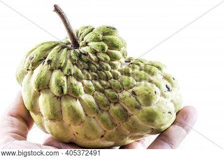 Hand Hold Sugar Apple ( Custard Apple, Annona, Sweetsop,cherimoya Fruit )
