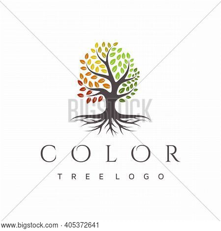 Vibrant Tree Logo Design, Root Vector. Tree Of Life Logo Design Inspiration
